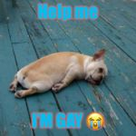 tired dog | Help me I'M GAY ? | image tagged in tired dog | made w/ Imgflip meme maker