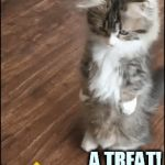 Oh Yeah | A TREAT! | image tagged in gifs,memes,kitten,oh yeah,treat,happy | made w/ Imgflip video-to-gif maker
