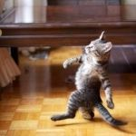 Cool Cat Stroll Meme | I'M A MODEL, YA KNOW WHAT I MEAN AND I SHAKE MY LIL TUSH ON THE CATWALK | image tagged in memes,cool cat stroll | made w/ Imgflip meme maker