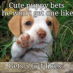 dog puppy bye | Cute puppy bets he won't get one like Gets 5,674 likes. | image tagged in dog puppy bye,memes | made w/ Imgflip meme maker