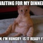 Chester The Cat Meme | WAITING FOR MY DINNER. MAN, I'M HUNGRY. IS IT READY YET? | image tagged in memes,chester the cat | made w/ Imgflip meme maker