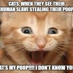 Excited Cat Meme | CATS, WHEN THEY SEE THEIR HUMAN SLAVE STEALING THEIR POOP. THAT'S MY POOP!!!! I DON'T KNOW YOU!!! | image tagged in memes,excited cat | made w/ Imgflip meme maker
