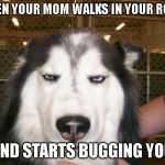 Annoyed Dog | WHEN YOUR MOM WALKS IN YOUR ROOM AND STARTS BUGGING YOU | image tagged in annoyed dog,mom | made w/ Imgflip meme maker