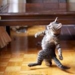 the best feeling in the world | ME STROLLING INTO MY NEXT CLASS AFTER I WIN KAHOOT | image tagged in memes,cool cat stroll | made w/ Imgflip meme maker