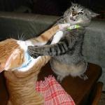 Two cats fighting for real meme