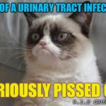 In memory of the late great Tadar Sauce | DIES OF A URINARY TRACT INFECTION SERIOUSLY PISSED OFF R.I.P GRUMPY CAT | image tagged in grumpy cat,rest in peace,infection | made w/ Imgflip meme maker