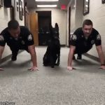 Police Dog Getting Buff | image tagged in gifs,pushups,dogs,cops,police dogs,police | made w/ Imgflip video-to-gif maker