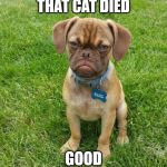 Grumpy Dog | THAT CAT DIED GOOD | image tagged in grumpy dog | made w/ Imgflip meme maker