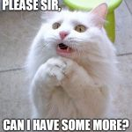 Begging Cat | PLEASE SIR, CAN I HAVE SOME MORE? | image tagged in begging cat | made w/ Imgflip meme maker
