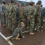 army dog meme