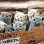 box of cats | image tagged in box of cats | made w/ Imgflip meme maker