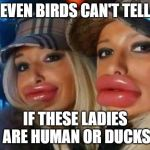 Duck Face Chicks Meme | EVEN BIRDS CAN'T TELL IF THESE LADIES ARE HUMAN OR DUCKS | image tagged in memes,duck face chicks | made w/ Imgflip meme maker