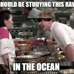 Angry Chef Gordon Ramsay Meme | YO U SHOULD BE STUDYING THIS RAW FISH IN THE OCEAN | image tagged in memes,angry chef gordon ramsay | made w/ Imgflip meme maker