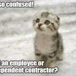 Sad Cat Meme | I'm so confused! Am I an employee or independent contractor? | image tagged in memes,sad cat | made w/ Imgflip meme maker