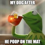 But Thats None Of My Business Meme | MY DOG AFTER HE POOP ON THE MAT | image tagged in memes,but thats none of my business,kermit the frog | made w/ Imgflip meme maker