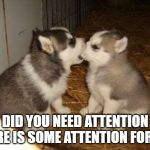 Cute Puppies Meme | DID YOU NEED ATTENTION HERE IS SOME ATTENTION FOR YA | image tagged in memes,cute puppies | made w/ Imgflip meme maker