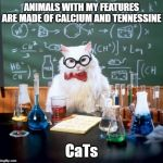 Chemistry Carbon-Astatine | ANIMALS WITH MY FEATURES ARE MADE OF CALCIUM AND TENNESSINE CaTs | image tagged in memes,chemistry cat | made w/ Imgflip meme maker