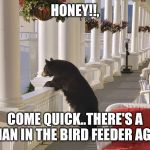 Balcony Bear | HONEY!!, COME QUICK..THERE'S A HUMAN IN THE BIRD FEEDER AGAIN! | image tagged in balcony bear | made w/ Imgflip meme maker
