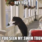 Balcony Bear | HEY YOU HAVE YOU SEEN MY SWIM TRUNKS? | image tagged in balcony bear | made w/ Imgflip meme maker