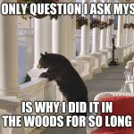 Balcony Bear | THE ONLY QUESTION I ASK MYSELF IS WHY I DID IT IN THE WOODS FOR SO LONG | image tagged in balcony bear | made w/ Imgflip meme maker