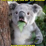 Surprised Koala Meme | WHEN YOU BROKE AND TRYING TO FILL UP ON SALAD AND YOUR DATE ORDERS THE LOBSTER PLATE | image tagged in memes,surprised koala | made w/ Imgflip meme maker