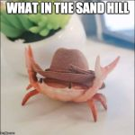 This might be the cleanest meme I have ever created. | WHAT IN THE SAND HILL | image tagged in cowboy crab,sand hill,sam hill,wtf | made w/ Imgflip meme maker