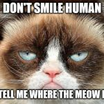 Grumpy Cat Not Amused Meme | DON'T SMILE HUMAN JUST TELL ME WHERE THE MEOW MIX IS | image tagged in memes,grumpy cat not amused,grumpy cat | made w/ Imgflip meme maker