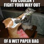 Two cats fighting for real | YOU COULDN'T FIGHT YOUR WAY OUT OF A WET PAPER BAG | image tagged in two cats fighting for real | made w/ Imgflip meme maker