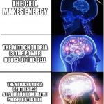Expanding Brain | THE CELL MAKES ENERGY THE MITOCHONDRIA SYNTHESIZES ATP THROUGH OXIDATIVE PHOSPHORYLATION THE MITOCHONDRIA IS THE POWER HOUSE OF THE CELL u/t | image tagged in expanding brain | made w/ Imgflip meme maker