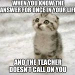 2 + 2 = fish | WHEN YOU KNOW THE ANSWER FOR ONCE IN YOUR LIFE AND THE TEACHER DOESN'T CALL ON YOU | image tagged in memes,sad cat | made w/ Imgflip meme maker
