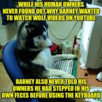 In the spirit of The Far Side part 20 - bad dog! | WHILE HIS HUMAN OWNERS NEVER FOUND OUT WHY BARNEY WANTED TO WATCH WOLF VIDEOS ON YOUTUBE BARNEY ALSO NEVER TOLD HIS OWNERS HE HAD STEPPED IN | image tagged in memes,i have no idea what i am doing | made w/ Imgflip meme maker