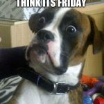 Surprised Dog | WHEN YOU THINK ITS FRIDAY BUT ITS MONDAY | image tagged in surprised dog | made w/ Imgflip meme maker