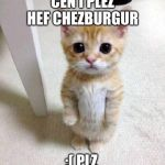 Cute Cat Meme | CEN I PLEZ HEF CHEZBURGUR :( PLZ | image tagged in memes,cute cat | made w/ Imgflip meme maker