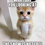Cute Cat Meme | WHAT ARE YOU LOOKING AT THE SHOW IS NOT FREE | image tagged in memes,cute cat | made w/ Imgflip meme maker