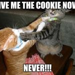 Two cats fighting for real | GIVE ME THE COOKIE NOW! NEVER!!! | image tagged in two cats fighting for real | made w/ Imgflip meme maker