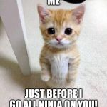 Cute Cat Meme | ME JUST BEFORE I GO ALL NINJA ON YOU! | image tagged in memes,cute cat | made w/ Imgflip meme maker