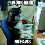 I Have No Idea What I Am Doing Meme | WORK HARD NO PAWS | image tagged in memes,i have no idea what i am doing | made w/ Imgflip meme maker