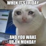 Crying cat | WHEN IT'S FRIDAY AND YOU WAKE UP ON MONDAY | image tagged in crying cat | made w/ Imgflip meme maker
