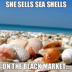 Sea shells | SHE SELLS SEA SHELLS ON THE BLACK MARKET... | image tagged in sea shells | made w/ Imgflip meme maker