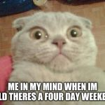 Stunned Cat | ME IN MY MIND WHEN IM TOLD THERES A FOUR DAY WEEKEND | image tagged in stunned cat | made w/ Imgflip meme maker