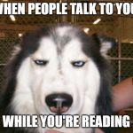 Annoyed Dog | WHEN PEOPLE TALK TO YOU WHILE YOU'RE READING | image tagged in annoyed dog | made w/ Imgflip meme maker