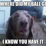 High Dog Meme | WHERE DID MY BALL GO I KNOW YOU HAVE IT | image tagged in memes,high dog | made w/ Imgflip meme maker