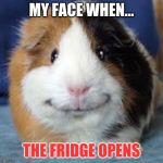 Guinea Pig | MY FACE WHEN... THE FRIDGE OPENS | image tagged in guinea pig | made w/ Imgflip meme maker