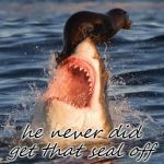 Travelonshark Meme | he never did get that seal off | image tagged in memes,travelonshark | made w/ Imgflip meme maker