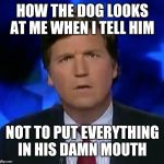 confused Tucker carlson | HOW THE DOG LOOKS AT ME WHEN I TELL HIM NOT TO PUT EVERYTHING IN HIS DAMN MOUTH | image tagged in confused tucker carlson | made w/ Imgflip meme maker