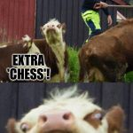 Bad pun cow  | DO YOU KNOW WHAT KIND OF PIZZA CHESS PLAYERS LIKE? EXTRA 'CHESS'! | image tagged in bad pun cow | made w/ Imgflip meme maker