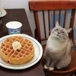 Cat likes their waffle meme