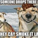 Original Stoner Dog Meme | WHEN SOMEONE DROPS THERE JOINT SO THEY CAY SMOKE IT LATER. | image tagged in memes,original stoner dog | made w/ Imgflip meme maker