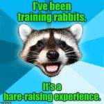 Lame Pun Coon Meme | I've been training rabbits. It's a hare-raising experience. | image tagged in memes,lame pun coon | made w/ Imgflip meme maker