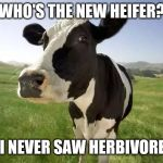 cow | WHO'S THE NEW HEIFER? I NEVER SAW HERBIVORE | image tagged in cow | made w/ Imgflip meme maker